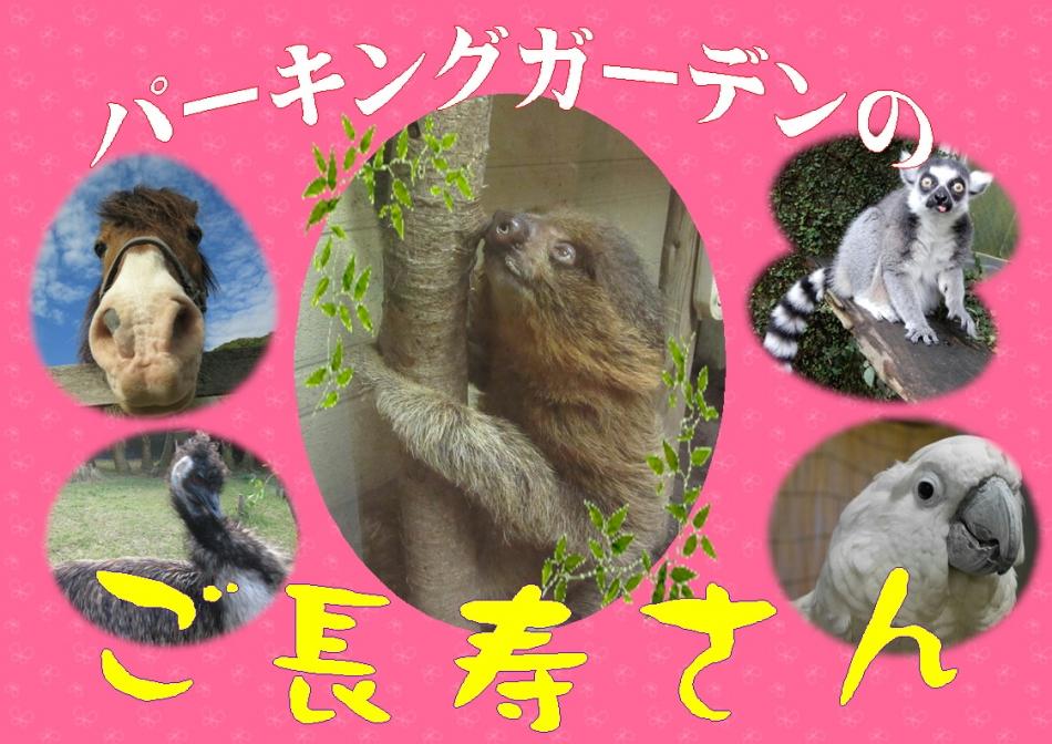 ★ナマケモノのリノくん★