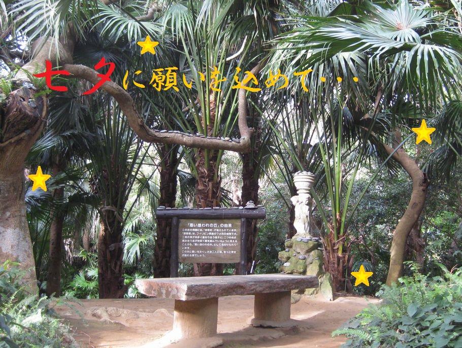 七夕の願いは「相思樹」に込めて・・・
