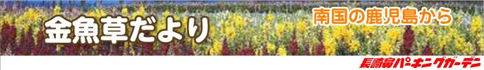 南国 鹿児島から金魚草だより